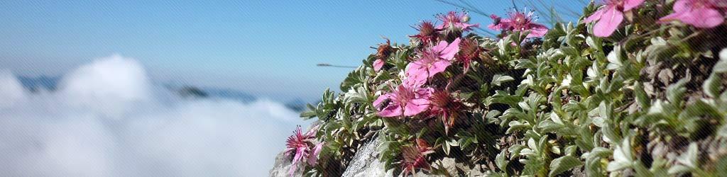 slide flora