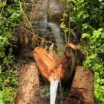 La zona è ricca di sorgenti d'acqua